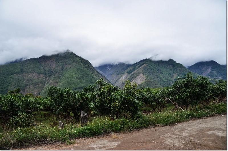 歐帕喀爾山土產道登山口西北往濁水溪山(L)