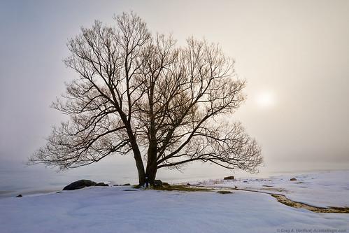 maine fog winter winterfog mist snow landscape nature tree silhouette wassookeag lake ice pond lakewassookeag dextermaine penobscotcounty newengland sunrise morning