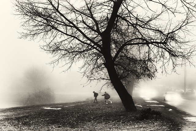 boys, tree and cars in the fog