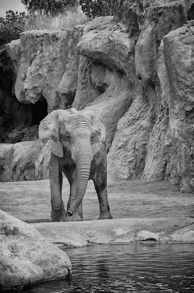 Zoos / Parcs animaliers - Page 26 40042756773_1269e36f04_o