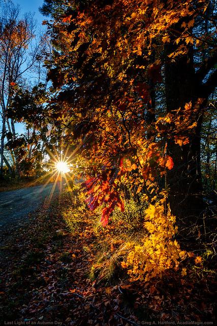 Last Light of Autumn Day