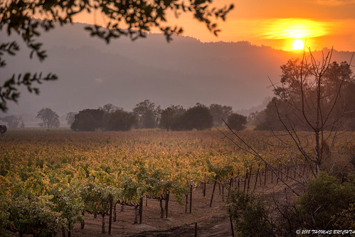 tombrichta tombrichtaphotography tombrichtaworkshops travel travelphotography travelphotographer napa napacounty winecountry leica leicasl leicacamera sunset