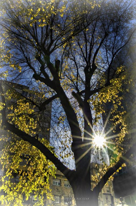 Árbol a contra luz, resaltando el vede de las hojas con los rayos del Sol que se ve en el frente.
