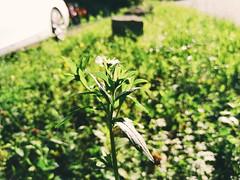 A flower in focus