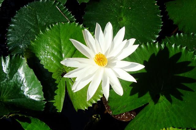 Flower, Sony DSC-W120