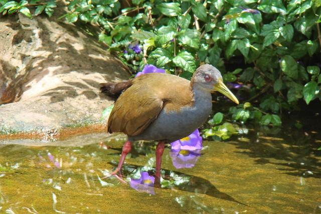 Parque das Aves, Sony DSC-H50