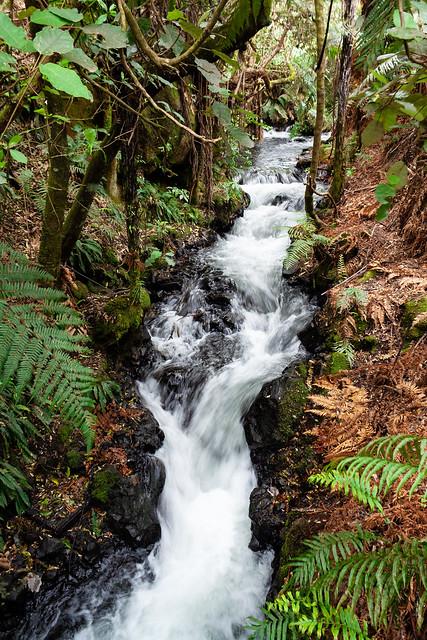 Rotorua, Canon EOS DIGITAL REBEL XSI, Canon EF-S 18-55mm f/3.5-5.6 IS