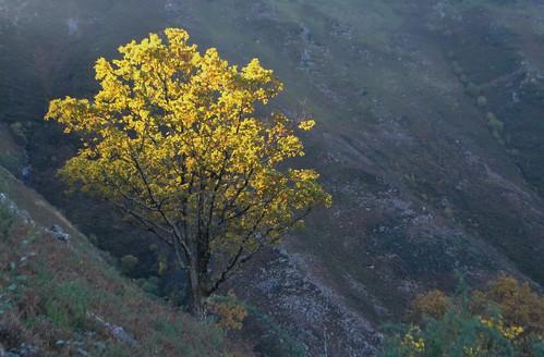 L'arbre au soleil.