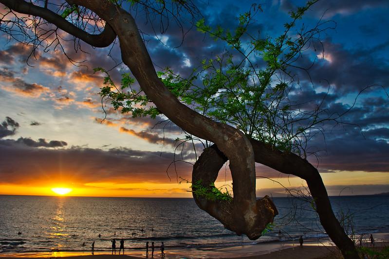 Loophole Tree