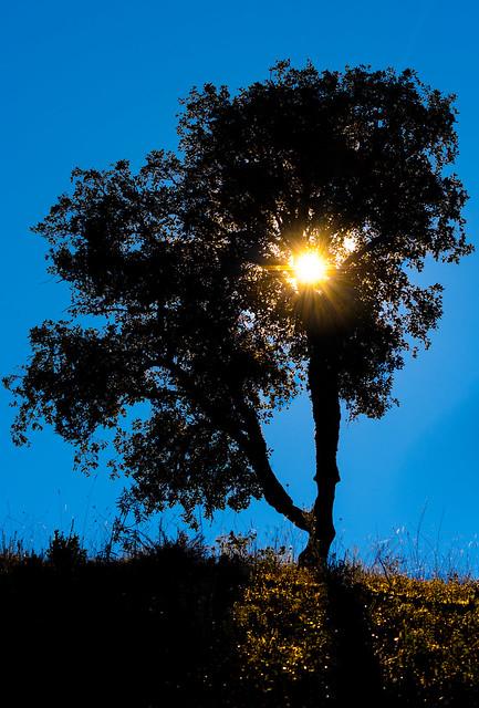 December Morning Algarve Sun