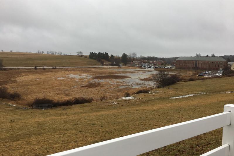 Horsebarn hill wetlands