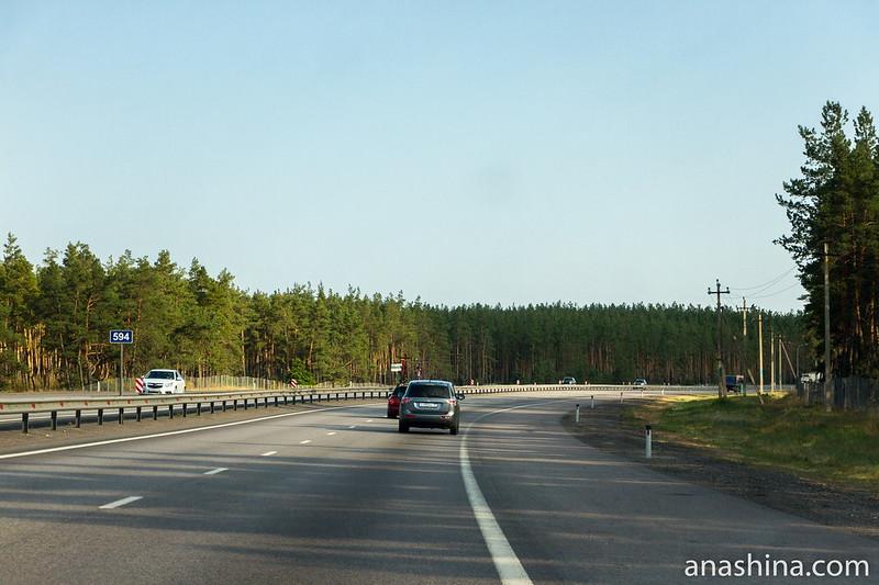 Леса в Воронежской области