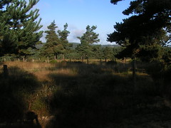 20080907 31676 1008 Jakobus Wald Wiese Hügel Sonne - Photo of La Chaze-de-Peyre