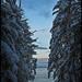 winter morning sky - through a gap