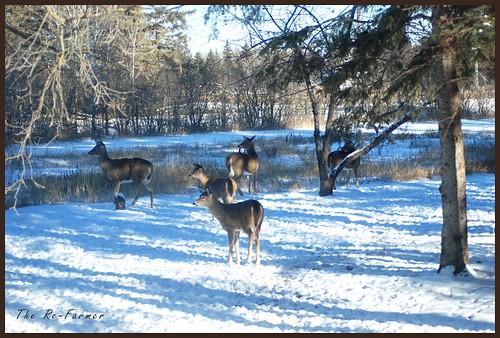 2018-12.deer.herd