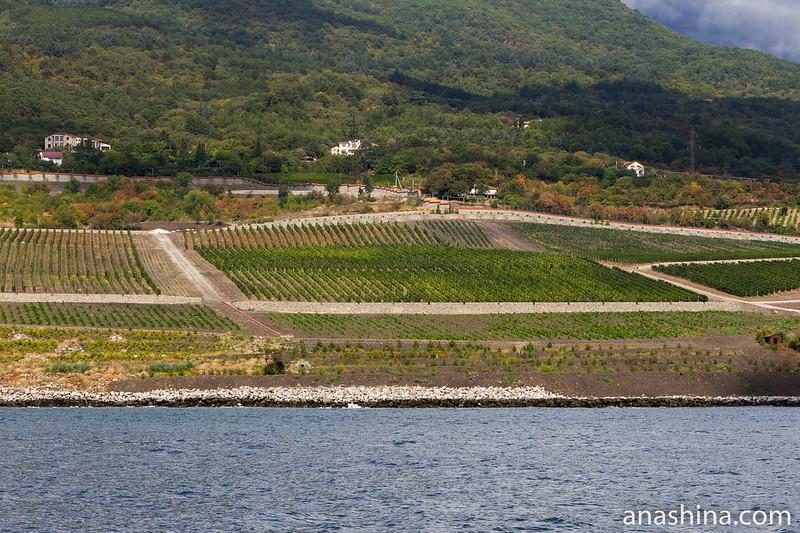 Виноградники близ Гурзуфа, Крым
