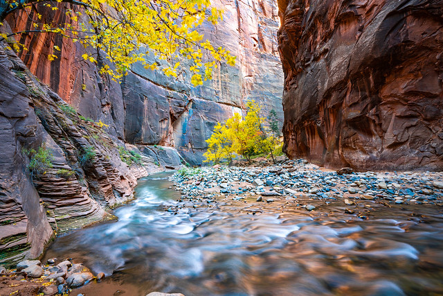 Zion Canyon Glow Peak Fall Colors Cottonwoods Zion Narrows Hike! Zion National Park Fall Foliage Utah Autumn Colors Fine Art Landscape & Nature Photography! Sony A7R III & Sony FE 16-35mm f/2.8 GM G Master Lens! High Res Photography! Sony A7R3 & GMASTER