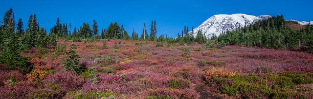 Mount Rainier, Nikon D850, AF-S Nikkor 16-35mm f/4G ED VR