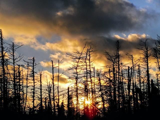 Sunset in the wild, Sony DSC-T90