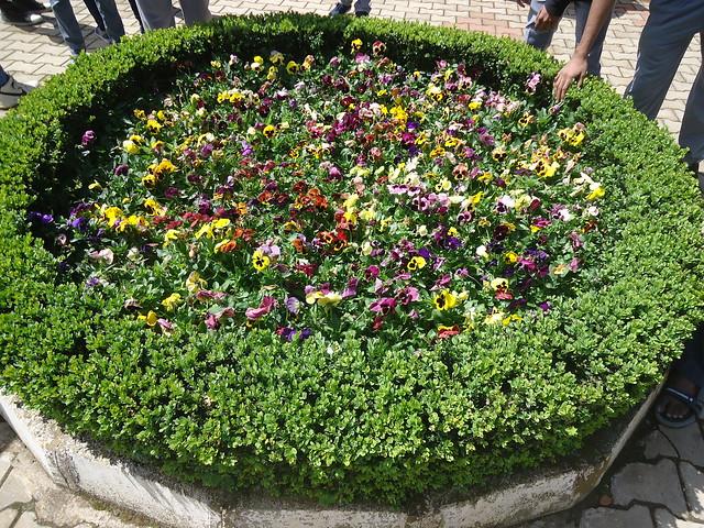 garden, Sony DSC-W530