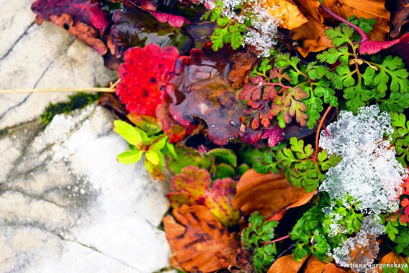 Яркие растения на камне