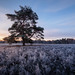 Sunrise on a frosty morning | Westruper Heide, Germany by wiscmic