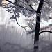summer at Harris Lake in infrared 7