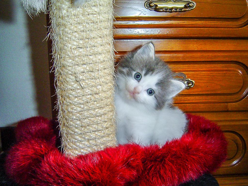 Fotos de animales de todo tipo incluyendo mascotas que más te gustan - Página 13 32442902068_6961770cb6_b
