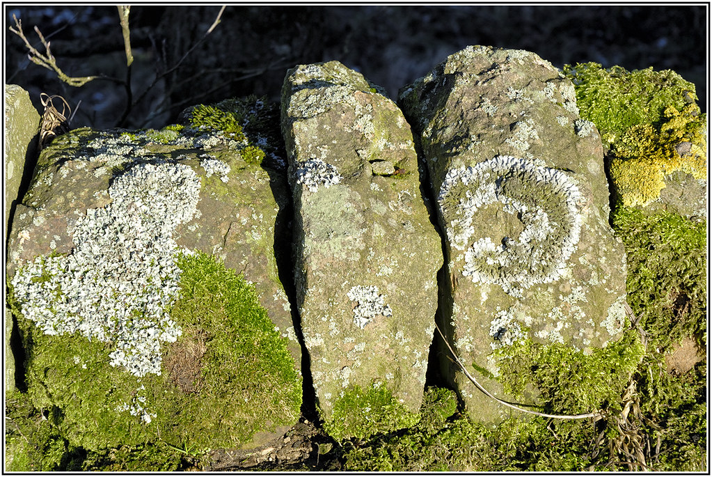 Lichen and Moss on dry stone wall, DIGLEY RESERVOIR