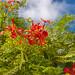 Blüten auf Bermuda