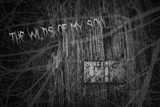 2018.12.03_337/365 - the wilds of my soul