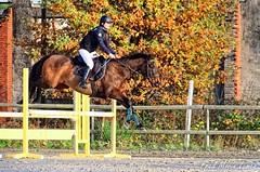 Venteille-concours-Marcheprime-2018-12-09-103 (Elo) - Photo of Marcheprime