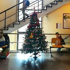 #Buongiorno Sapienza con una foto dell'albero di Natale dell'Edificio di Botanica di @cx66rm ・・・ #Repost: «#AtmosfereNatalizie @SapienzaRoma Il nostro albero di Natale accoglie gli studenti nell'Edificio di Botanica: perla architettonica della Città unive