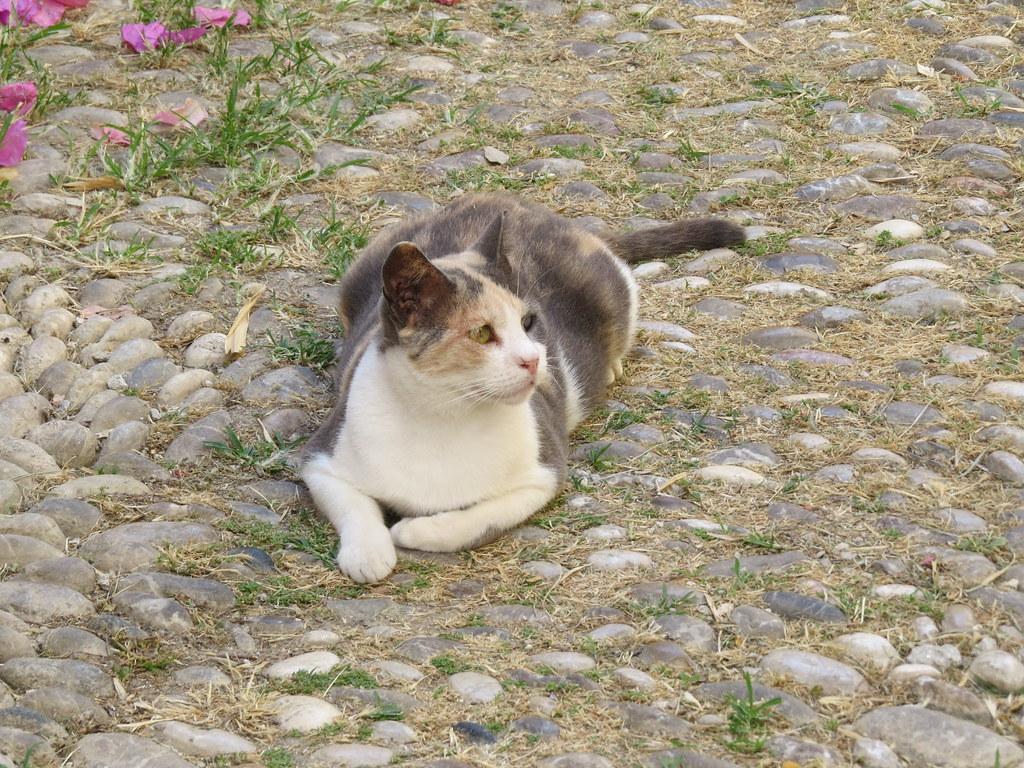 Коты и кошки Родоса