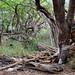 Kealakekua Bay - Wild Forest