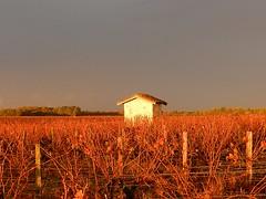 Cabane de vigne - Photo of Ordonnac