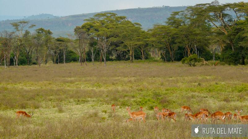 Animales hacer un safari P1130555