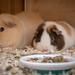 Beste Freundinnen - Molli & Cindy