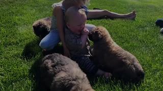 PuppiesInSummer
