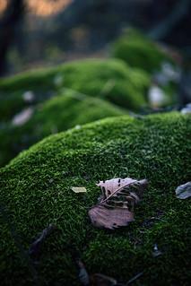 Last leaves..