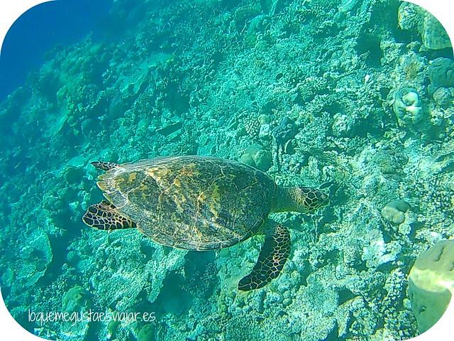 Maldivas1