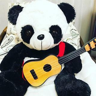 My teacher of music? パンダ師匠。