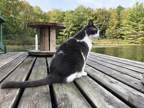 Little Lake - Puck on the dock