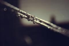 droppy little droplets