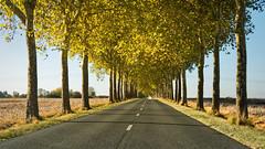 Le plafond de feuilles - Photo of Varennes-sur-Fouzon