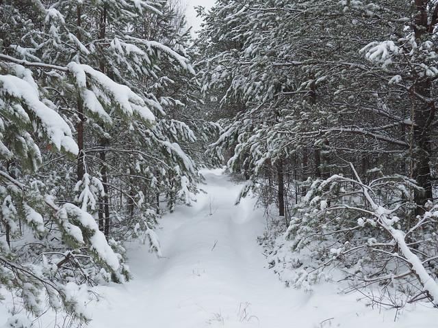 Way in forest, Olympus E-M10MarkII, LUMIX G VARIO 14-42/F3.5-5.6 II