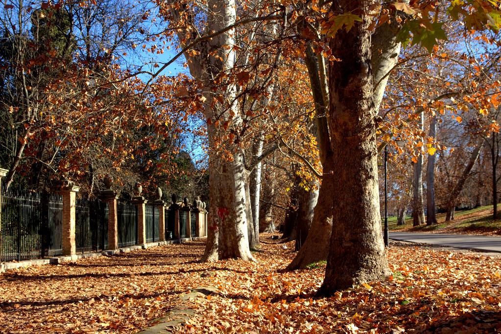 una alfombra de hojas caídas