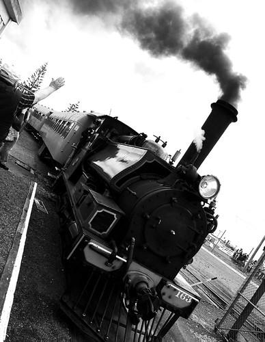 feilding-steam-17-11-13_38146094492_o