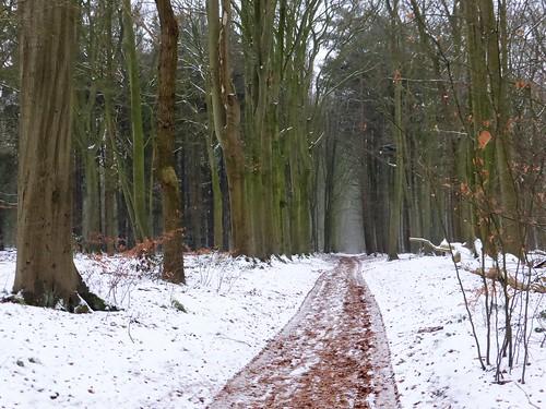 Winter in Rijsterbos