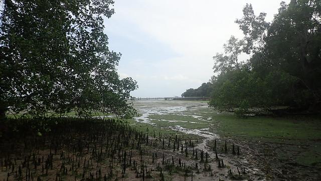 Mangroves at Chek Jawa